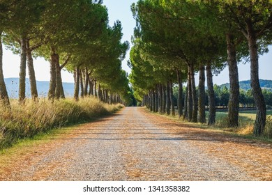 Scenic rural landscape of maritime pine trees a long the road in the natural park of Tuscany, Italy. Fantastic outdoor photography.