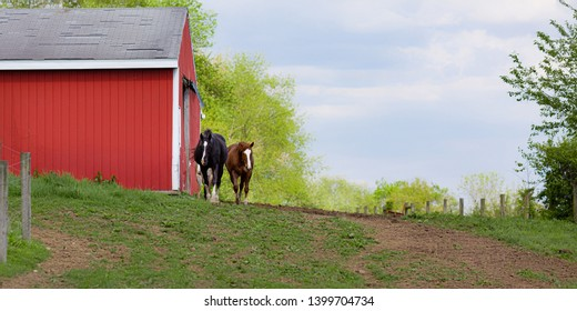 Scenic rural landscape of two horses approaching from red bard to outside fenced in pasture during spring season