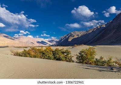 Scenic Sand dunes at Hunder, Nubra Valley, ladakh, India