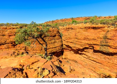 The scenic sandstone domes called The Lost City and gum trees alonge Kings Canyon Rim in Watarrka National Park, Central Australia. Iconic attraction place in Outback Red Center, Northern Territory.