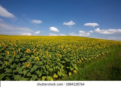 Scenic Saskatchewan Nature Photography Canada