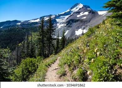 A scenic section of the Timberline Trail on Mount Hood, in Oregon.