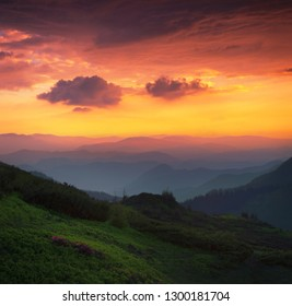 scenic spring sunrise in the mountains, blooming spring pink flowers on meadow on background golden morning sky and dawn sunlight, vertical nature image, America mountains