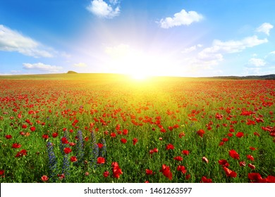 scenic summer rural landscape, field blooming red poppy and lupine flowers on background sunset blue sky and sun rays and sunlshine, floral nature background image, west Europe, France