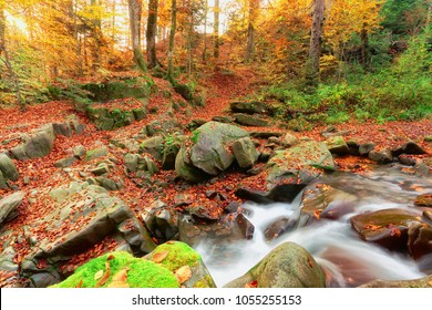 scenic sunrise landscape, river in gold sunlight autumn forest, picturesque colorful scenery , falled leaves on stones near fast stream, Europe wallpaper background image