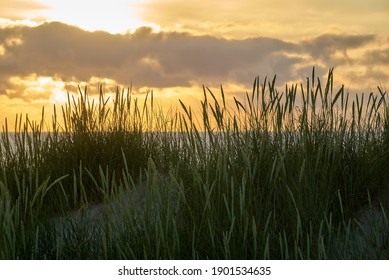 scenic sunset behind beach grass on a dune at the north sea coast in Vejers Strand, Denmark