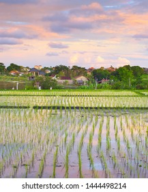Scenic sunset sky over rice fields terraces, rural landscape with small village in background, Bali, Indonesia