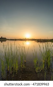 Scenic of swamps in national park at sunset