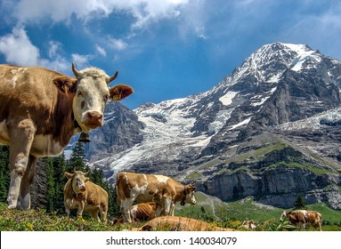 Scenic Swiss Alps mountains with cows and clouds