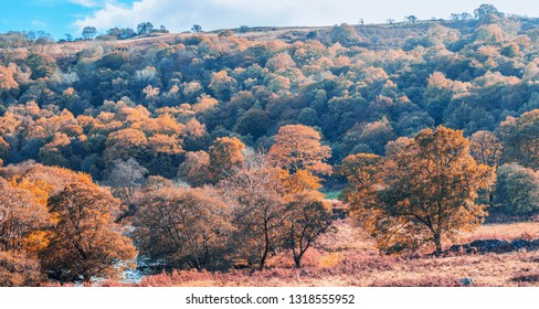 Scenic valley with colorful autumnal trees in Snowdonia, North Wales, UK