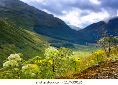 Scenic view of Argyll Forest Park in the Highlands of Scotland