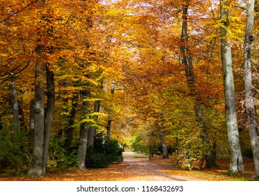 Scenic View of Autumn Forest. Golden Fall. Foliage Trees in a Park