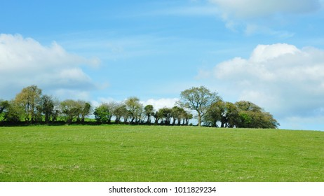 Scenic View of a Beautiful Green Field with a Blue Sky Above