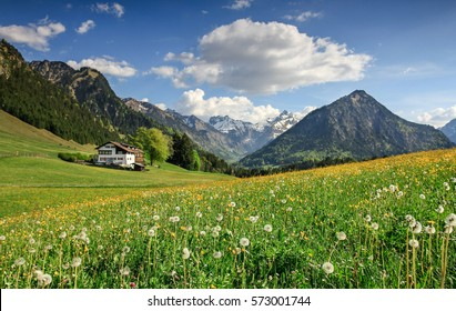 Scenic view of beautiful landscape in the Bavarian Alps with fresh green meadows, blooming flowers, a farmhouse and snow-capped mountains on a sunny day with blue sky and clouds in spring.
