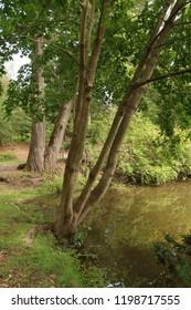 Scenic view of a beautiful, lush park. Summer season.
