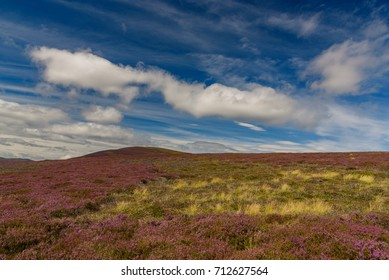 Scenic view of the beautiful nature of Cairngorms National Park in Scotland in summer