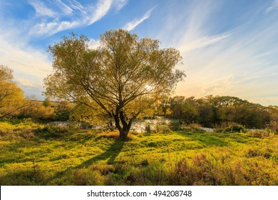 Scenic view of beautiful sunset above the river at autumn evening with yellow willow at foreground