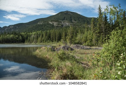Scenic view in Bow River Provincial Park in the Kananaskies Valley in Alberta Canada