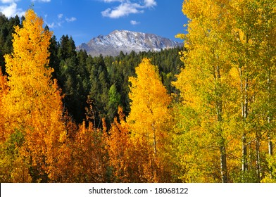 Scenic view of brilliant aspen trees, in the Pike National Forest, of Colorado, during the autumn season with Pikes Peak showing through