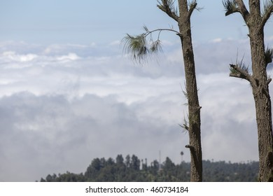 Scenic view of Cemara Lawang near Mount Bromo at early morning