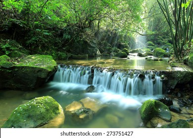 Scenic view of a cool refreshing waterfall hidden in a mysterious forest with sunlight shining through lush greenery and flowers fallen on mossy rocks ~ Beautiful river scenery of Taiwan in springtime