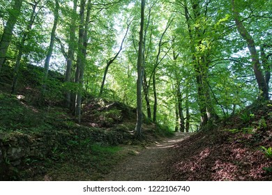 Scenic View of a Dirt Track Path through a Beautiful Lush Green Leafy Forest
