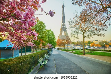 Scenic view of the Eiffel tower with cherry blossom trees in full bloom in Paris, France