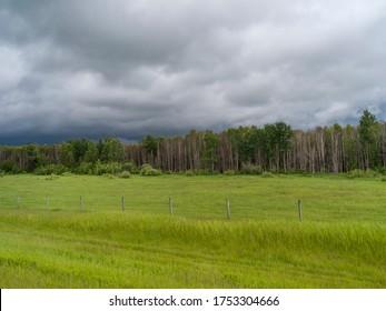 Scenic view of field in rural area, Alberta Prairies, Alberta, Canada