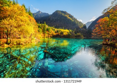 Scenic view of the Five Flower Lake among fall woods in Jiuzhaigou nature reserve (Jiuzhai Valley National Park), China. Submerged tree trunks are visible in azure water.