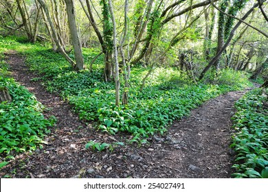 Scenic View of Forking Rocky Pathways on a Forest Trail