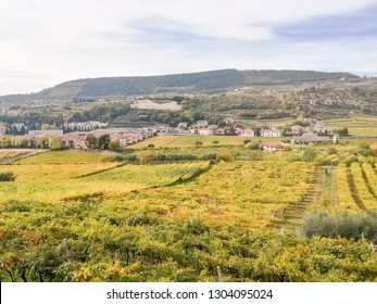Scenic view of the freshly harvested grape fields in autumn in Valpolicella
