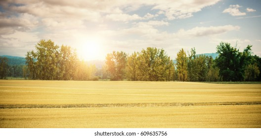 Scenic view of grasslands against trees