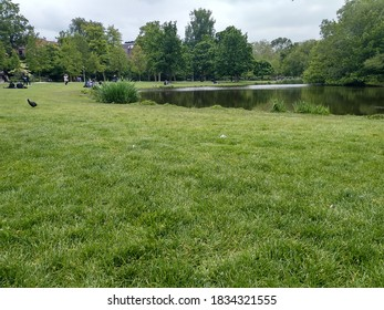Scenic view of green field and pond at Vondelpark in Amsterdam, Netherlands