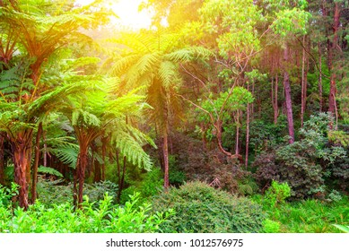 Scenic view of jungle with giant tree ferns