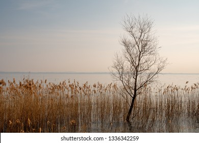 Scenic view of a lakeside with marsh plant and reed (Phragmites australis), Sirmione, Lake Garda, Lombardy, Italy