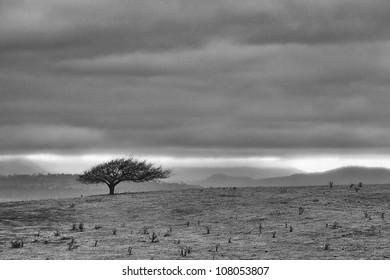 Scenic view of landscape with lone tree on a small hill