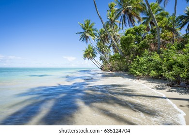 Scenic view with long palm tree shadows on the rustic landscape of the shore of an empty Brazilian beach in Bahia, Brazil