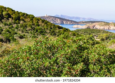 Scenic view with lush green bushes, islet and tower on a hill in Teulada Sardinia Italy.