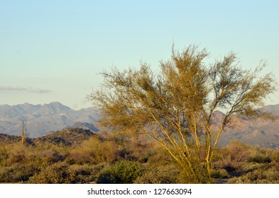 A scenic view of the magnificent desert surrounded by mountain peaks, at McDowell Mountain Regional Park in Arizona, with a single tree glowing in golden light.