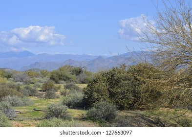 A scenic view of the magnificent desert surrounded by mountain peaks, at McDowell Mountain Regional Park in Arizona, on a sunny morning.