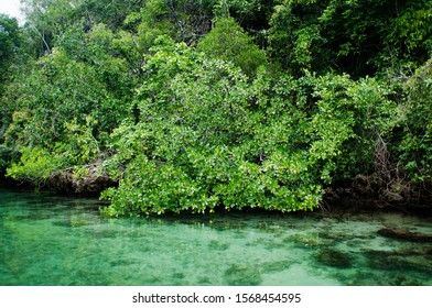 Scenic view of mangrove forest and coral reef in Secret Bay of Gam Island,  West Papua Indonesia.
