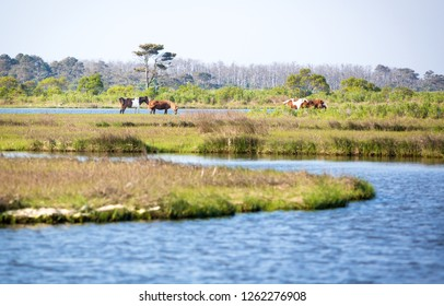 Scenic view of a marsh at Assateague Island National Seashore, Maryland with a group of wild ponies (Equus caballus) in the distance