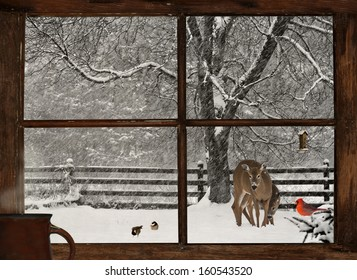 Scenic view of a mother, and baby deer, a bright red Cardinal, and two cute chickadees in a snowstorm, seen through a grunge farm house window with a cup of steaming coffee on the windowsill.