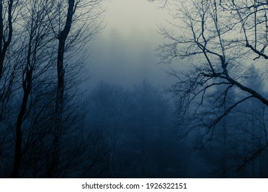Scenic View from a Mountain Cabin on a Misty, Foggy Morning