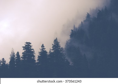 scenic view of mountain forests covering by fog..