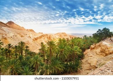 Scenic view of mountain oasis Chebika. Sahara Desert, Tunisia, Africa.