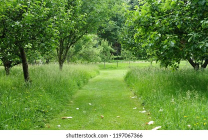 Scenic View of a Mowed Grass Path through an Orchard Garden