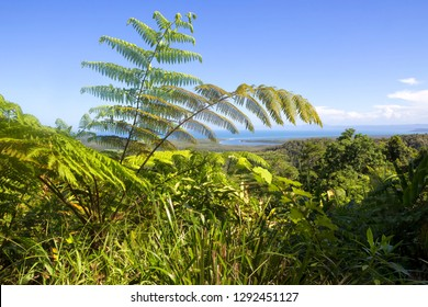 Scenic view from Mt Alexandra Lookout to the coast and The Daintree River in Tropical North Queensland, Australia