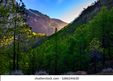 Scenic view on Caldera de Taburiente with green pine forest, ravines and rocky mountains near viewpoint Cumbrecita, La Palma, Canary islands, Spain in sunny day