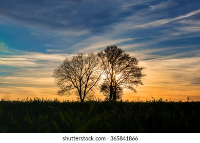 scenic view on trees in the setting sun